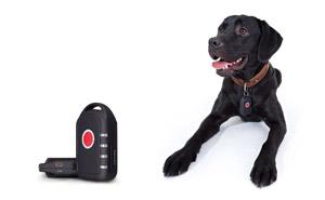 Ortungshalsband für Hunde